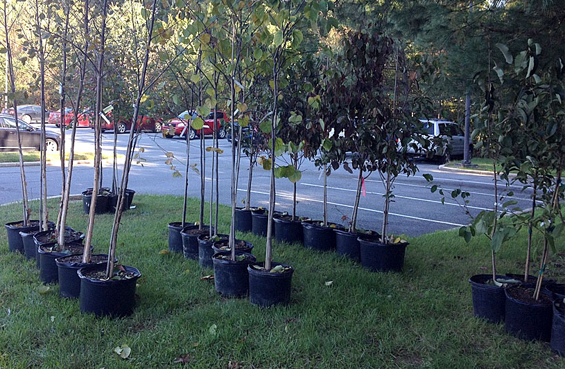 Mayfield Woods Middle School students plant trees
